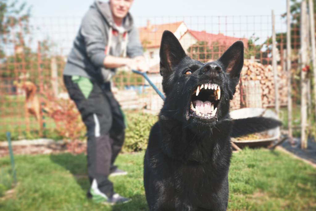 The Increased Risk of Dog Bite Injuries During COVID-19